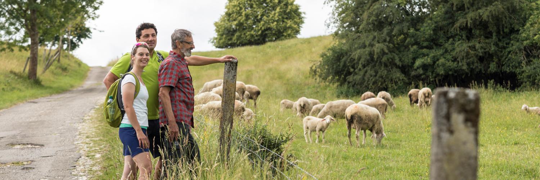 Drei Wanderer stehen vor einer Schafsweide neben einem Weg.