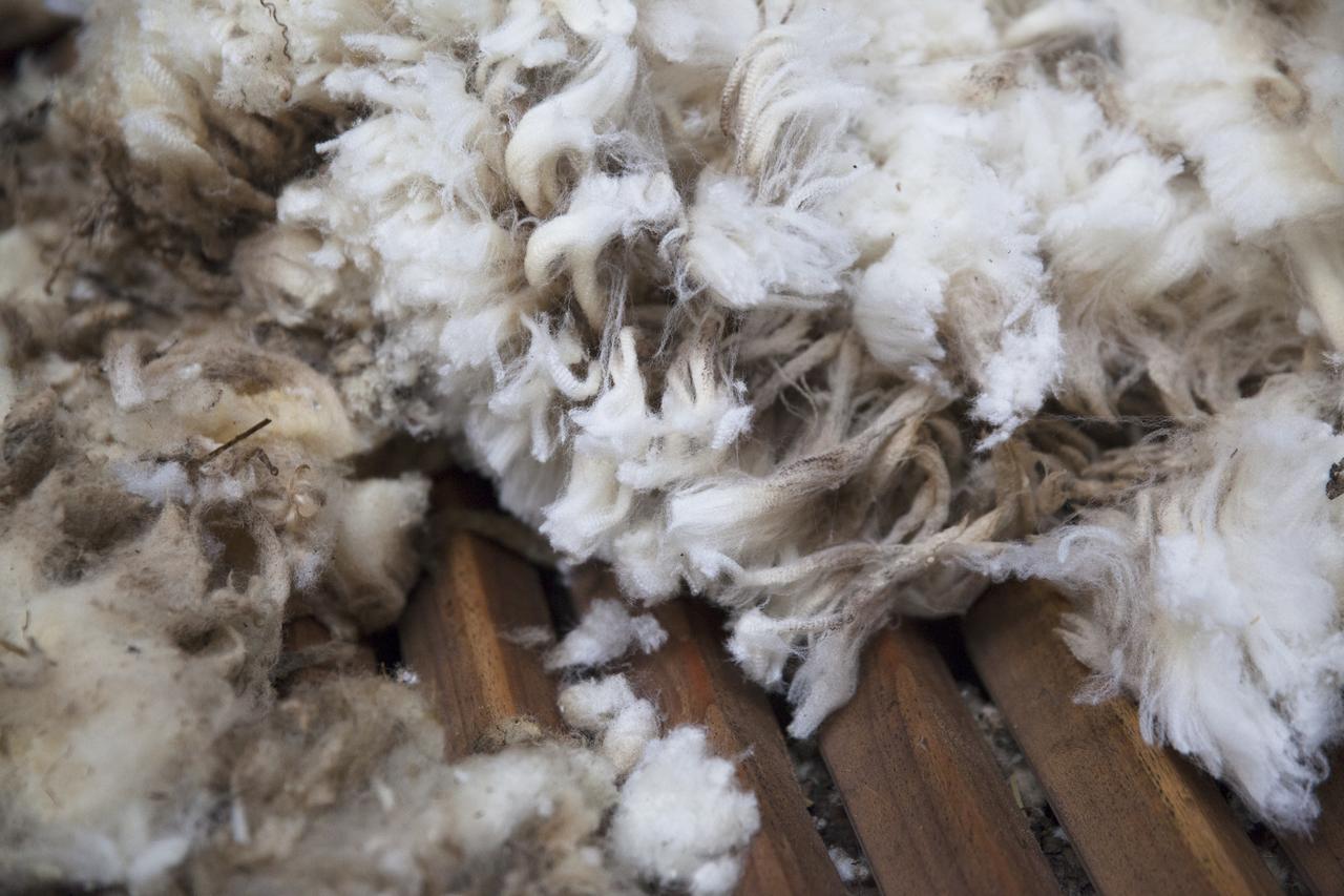Mehrere Schafsfelle liegen auf einem Tisch.