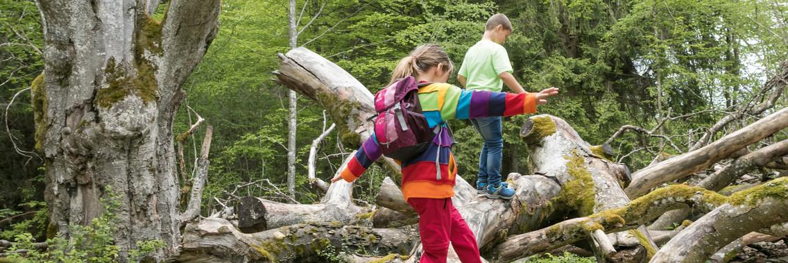 Kinder spielen bei einer Wanderung auf Baumstämmen in Münsingen.