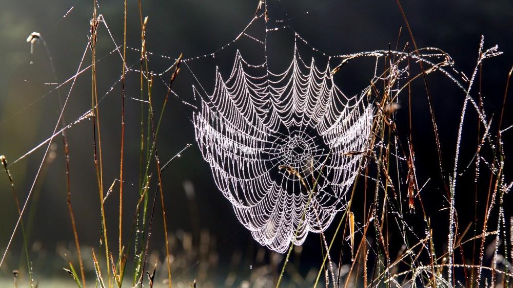 Spinnennetz mit Tautopfen unterhalb des Sternbergs in Gomandingen