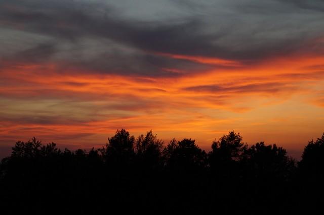 Eine schwarze Silhouette von Baumwipfeln im Sonnenuntergang. Die Wolken des Himmels leuchtend gelb-rot-orange.
