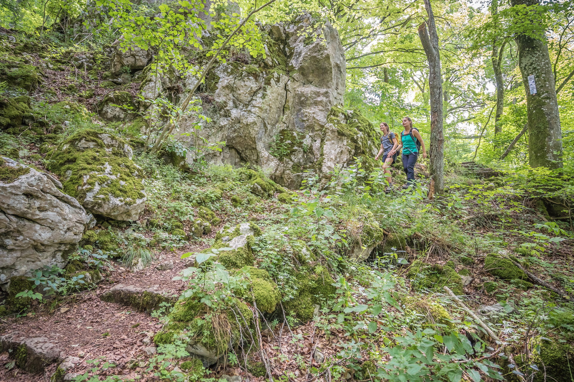 Zwei Wanderer*innen laufen durch einen Wald mit moosbedeckten Felsen und Stufen.
